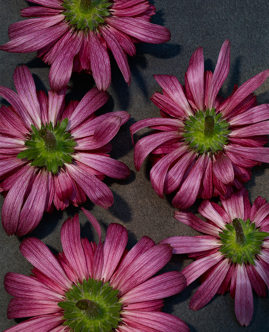 13_Test_Flowers_Aster_025