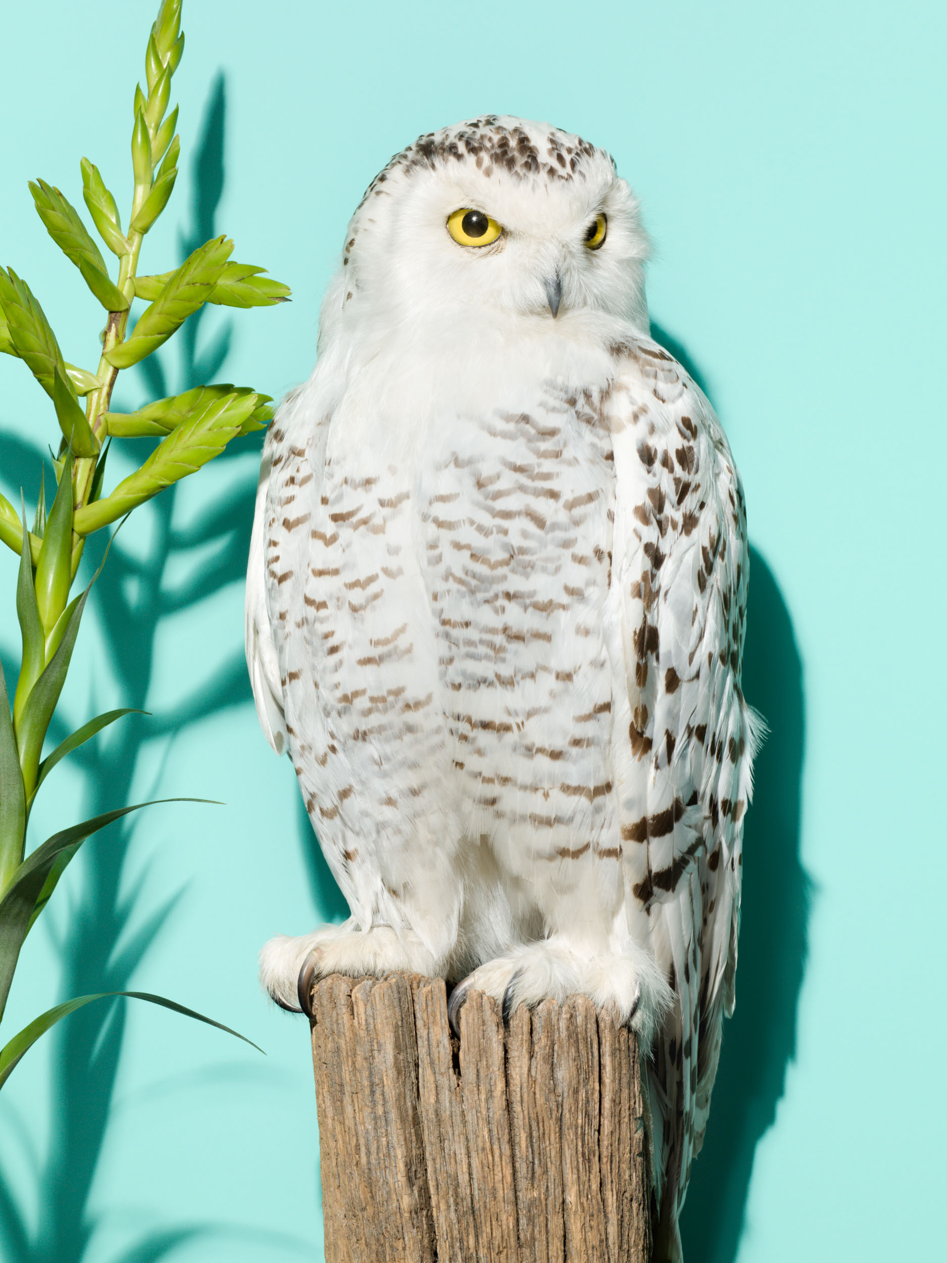 19_Taxidermy_Owl_010
