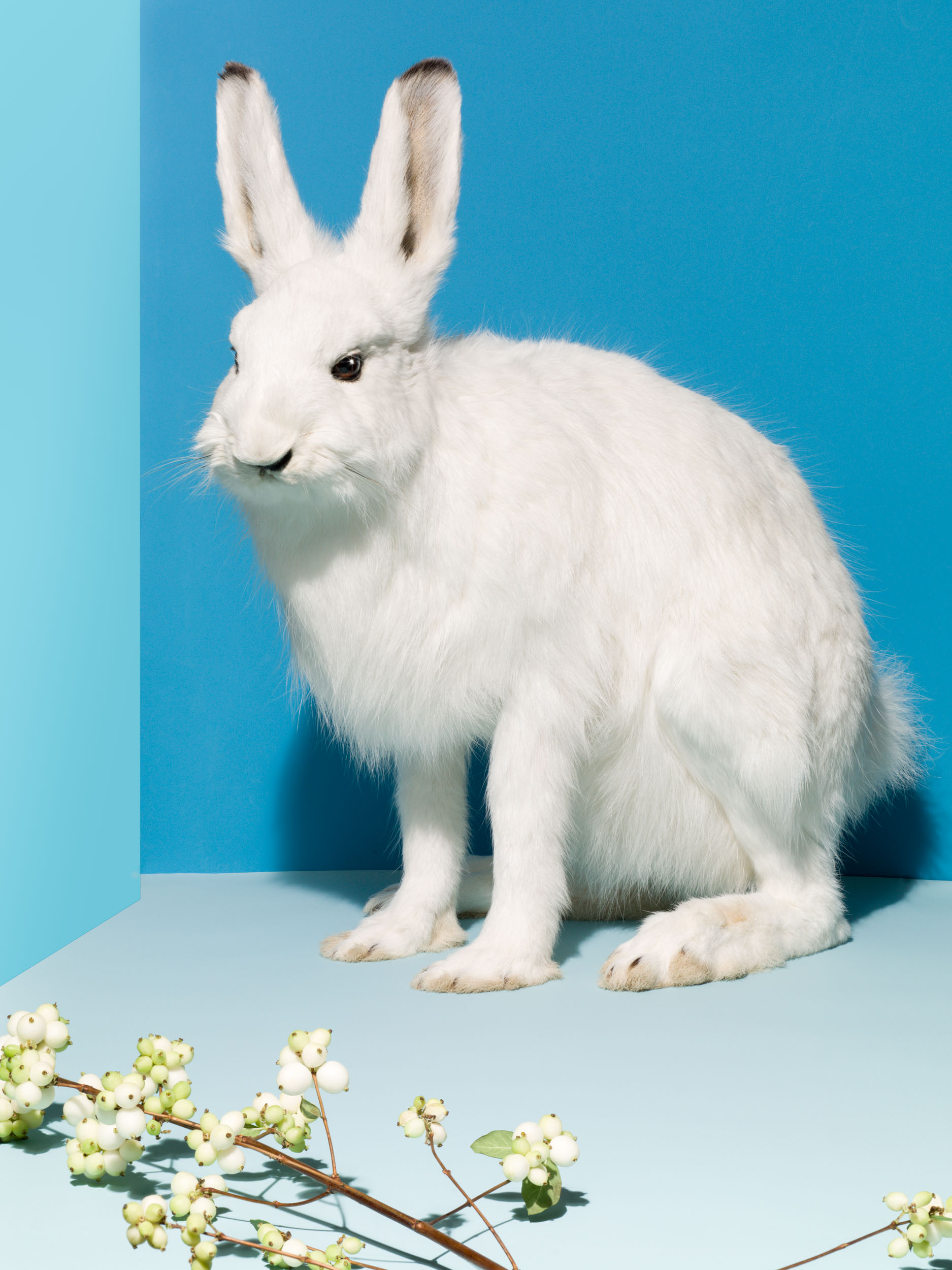 19_Taxidermy_Rabbit_015_Focus